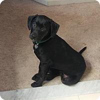 Adopt A Pet :: Gr Litter - Kramer - APPLICATIONS CLOSED - Livonia, MI