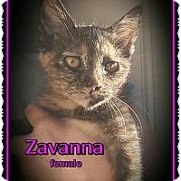 Adopt A Pet :: Zavanna - Richmond, CA