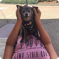 Adopt A Pet :: Inky - El Cajon, CA