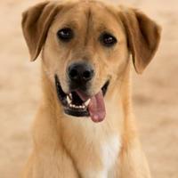 Adopt A Pet :: Claiborne - Columbiana, AL