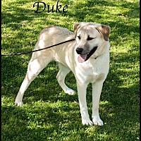 Adopt A Pet :: Duke - Ada, OK