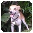 Photo 2 - Jack Russell Terrier Mix Dog for adoption in Poway, California - JACK