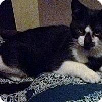 Adopt A Pet :: Lady - Temple, PA