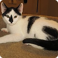 Adopt A Pet :: Rudy - Catasauqua, PA