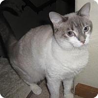 Adopt A Pet :: Caspera - Colorado Springs, CO