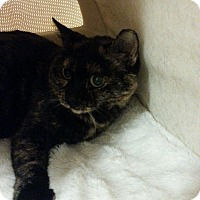 Adopt A Pet :: Snookie - West Dundee, IL