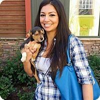 Adopt A Pet :: Harmony - Sacramento, CA