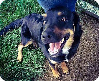 Rottweiler Mix Dog for adoption in Spokane, Washington - Rampage