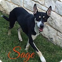 Adopt A Pet :: Sage 2.0 (fostered in Maine) - Cranston, RI