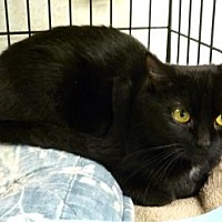 Adopt A Pet :: Selene - Westville, IN