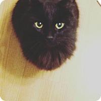 Adopt A Pet :: Charles - Plainville, MA