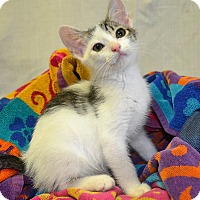 Adopt A Pet :: Smushy - Savannah, GA