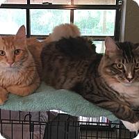Adopt A Pet :: Sebastian & Triton - Sarasota, FL
