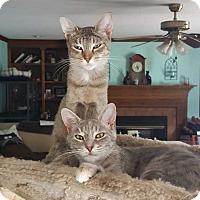 Adopt A Pet :: Goldi & Diamond - South Bend, IN