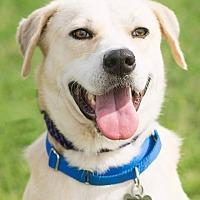 Adopt A Pet :: Parmesan - Houston, TX