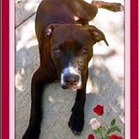 Adopt A Pet :: CoCo Puff - Rancho Cucamonga, CA