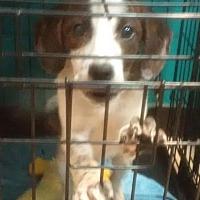 Adopt A Pet :: Eagle, Banjo, and Dante - Danbury, CT