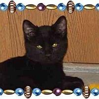 Adopt A Pet :: Ritchie - KANSAS, MO
