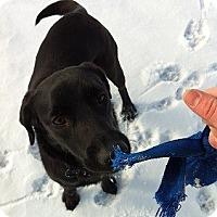 Adopt A Pet :: Lindsey - Hamilton, ON