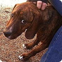 Adopt A Pet :: Denver - Fort Riley, KS
