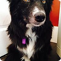Adopt A Pet :: Arctic - Saskatoon, SK