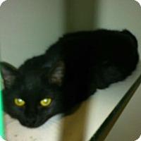Adopt A Pet :: Miracle - Hamilton, ON