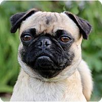 Adopt A Pet :: Bonzai - Pismo Beach, CA