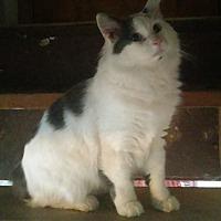 Adopt A Pet :: Pretty Boy - Mt. Pleasant, PA