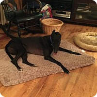 Adopt A Pet :: Chico - Spencerville, MD