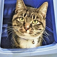 Adopt A Pet :: Gizmo - Diamondville, WY
