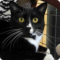 Adopt A Pet :: Emma - Quincy, CA