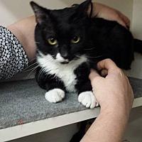 Adopt A Pet :: MALUMA - Tampa, FL
