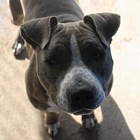 Adopt A Pet :: Aurora - Fort Madison, IA