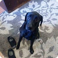 Adopt A Pet :: Ace - Concord, CA
