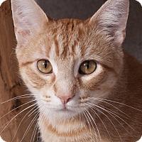 Adopt A Pet :: Sundance - Chicago, IL