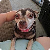 Adopt A Pet :: Pattycake - Sacramento, CA