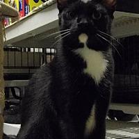 Adopt A Pet :: Benji - Land O Lakes, FL