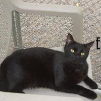 Adopt A Pet :: ELI - Franklin, NC