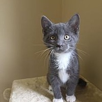 Adopt A Pet :: Quinn - Duluth, GA