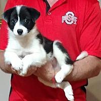 Adopt A Pet :: Bentley - South Euclid, OH