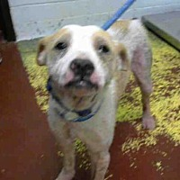 Adopt A Pet :: RUFFUS - Atlanta, GA