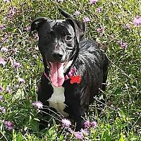 Adopt A Pet :: Jana - Potomac, MD