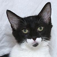Adopt A Pet :: Cookie W - Sacramento, CA