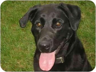 Labrador Retriever Mix Dog for adoption in Clinton, Missouri - Dudley