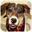 Photo 1 - Plott Hound Mix Dog for adoption in Cincinnati, Ohio - Blaze