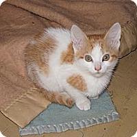 Adopt A Pet :: Vail - Tarboro, NC