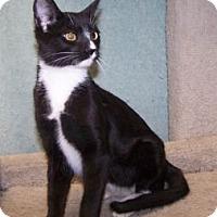 Adopt A Pet :: K-Dave4-Monkey - Colorado Springs, CO