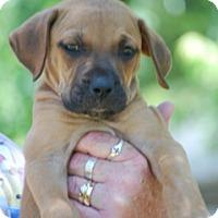 Adopt A Pet :: Bob - Providence, RI