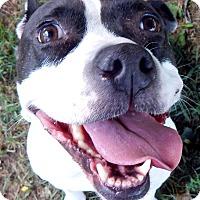 Adopt A Pet :: Molly - Lapeer, MI