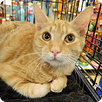 Adopt A Pet :: Herman - The Colony, TX